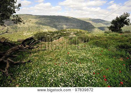 Spring Mountain Landscape, Israel