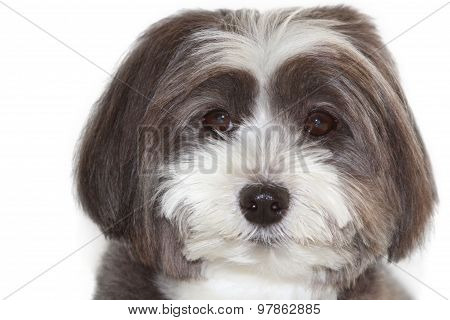 A portrait of a cute black and white dog.