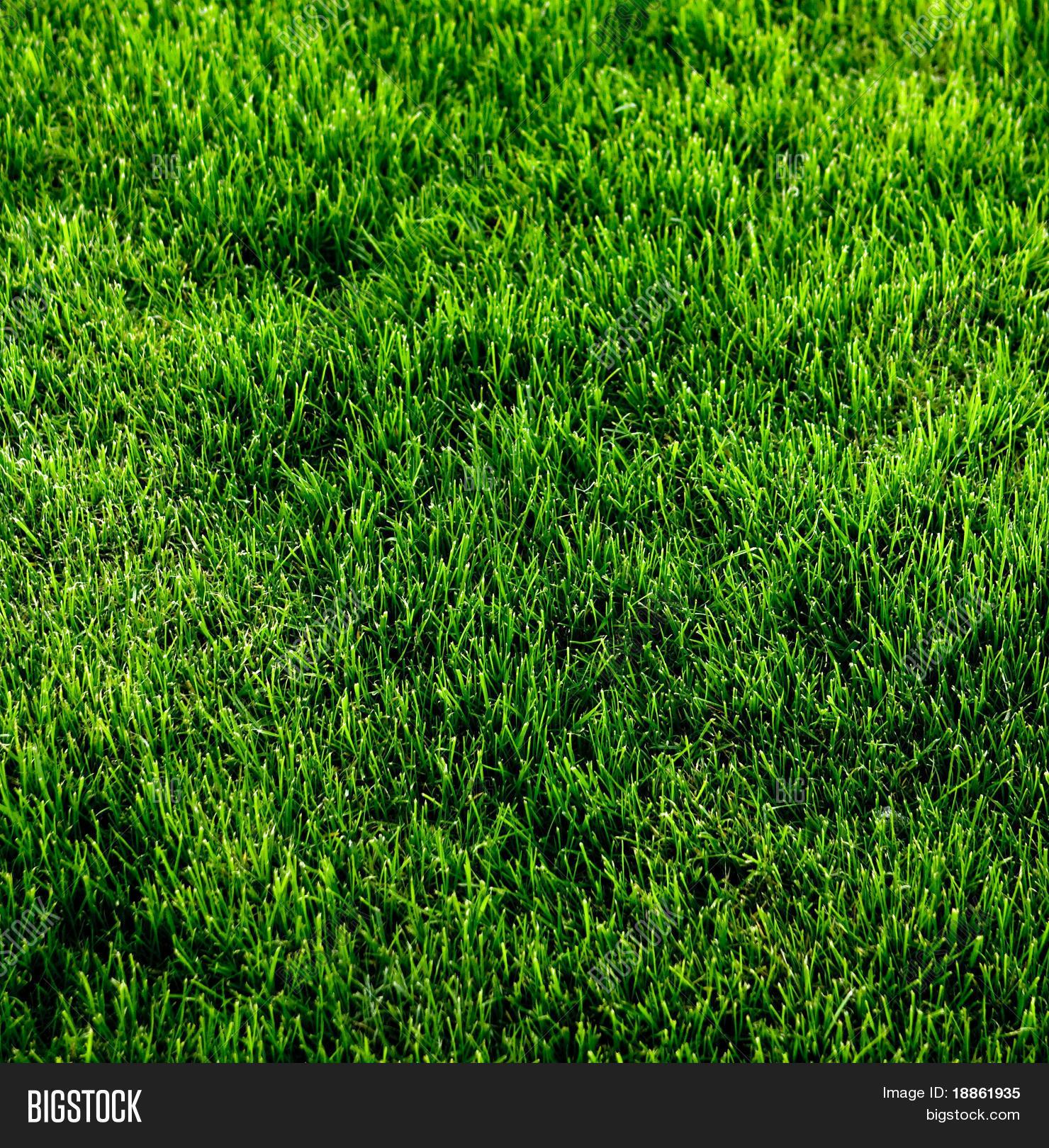 green grass texture from a soccer field green c58 green