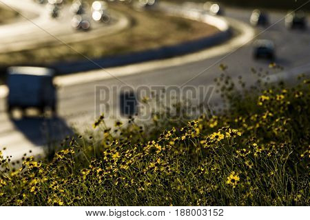 cars on a highway curve with wildflowers in the foreground