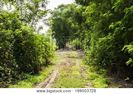 Ground corridor into the deep forest with tall trees on either side.