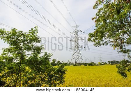 High voltage pole is installed in the middle of rice fields.