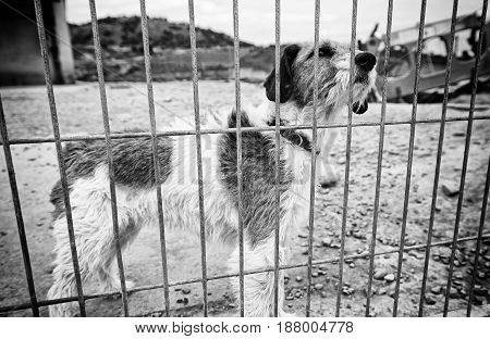Dog abandoned behind bars detail of a homeless pet loneliness and pity