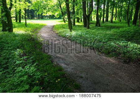 Quiet Path In A Dark Forest In The Spring