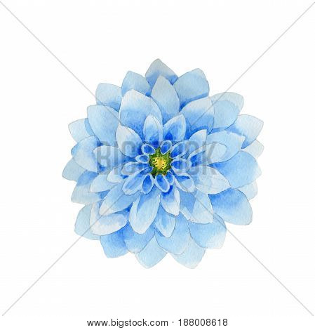 Wildflower dahila flower in a watercolor style isolated. Full name of the plant: blue dahila. Aquarelle wild flower for background, texture, wrapper pattern, frame or border.