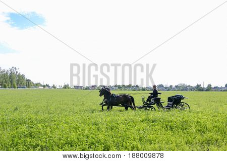 SLUTSK BELARUS - May 20 2017: the horse-drawn carriage rides the field
