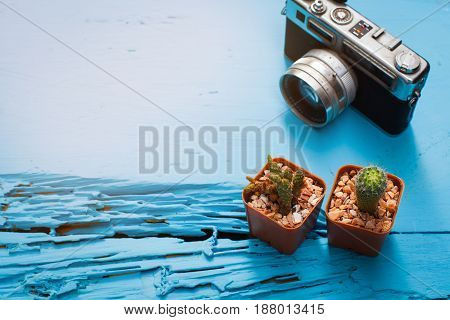 Cactus and odl camera on blue wood background