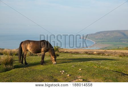 Exmoor Heritage Coast view towards Porlock Weir with pony on a summer evening in Somerset UK