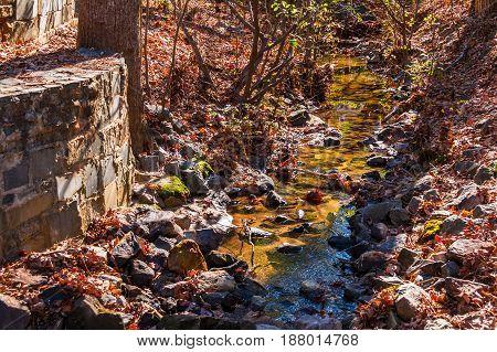 Little creek in the Stone Mountain Park in sunny autumn day Georgia USA