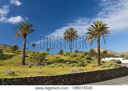Valley Of A Thousand Palms, Lanzarote, Spain
