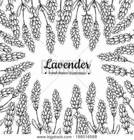 Lavender vector drawing frame. Isolated wild flower and leaves. Herbal engraved style illustration. Detailed botanical sketch for label, banner of organic cosmetic, medicine, beauty store, perfume