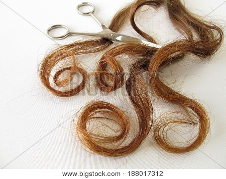 Genuine chestnut brown hair and a scissors