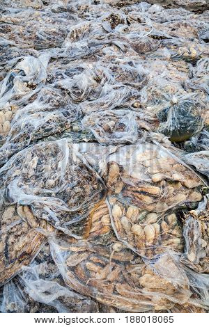 Rotten cucumbers in plastic sacks on the landfill.