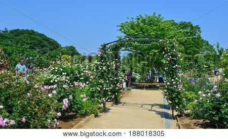 Flowers Blooming At Ashikaga Flower Park