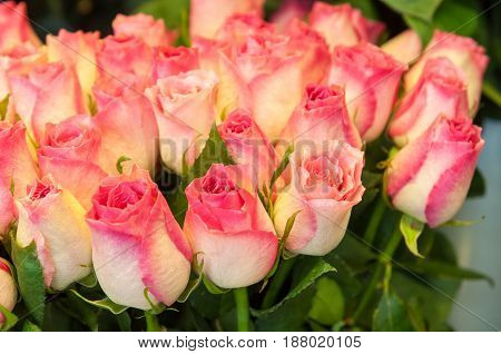 Beautiful bouquet of beige and pink roses