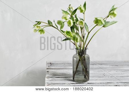 Bouquet of spring hellebore flowers in a vase. Spring floral still life with helleborus flowers. Home natural decoration