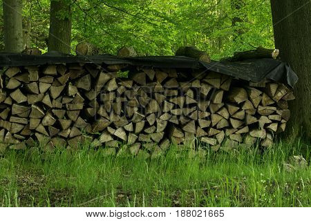 Germany: Stacked Firewood In The Forest In Lower Saxony