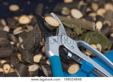 Scissors For Pruning Branches