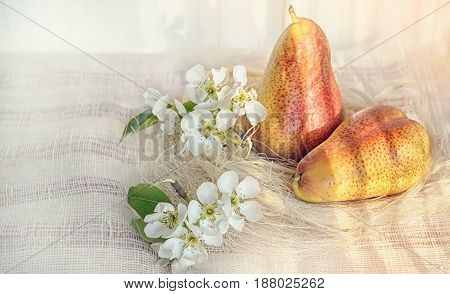 Pear still life with flowers art on the background of a fabric with beautiful sunlight tinted.