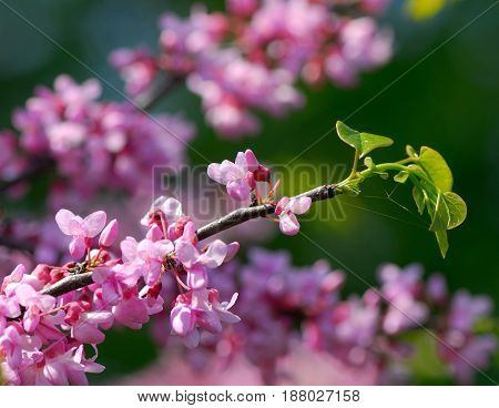 Pink flowers on a blurred background in a spring sunny day