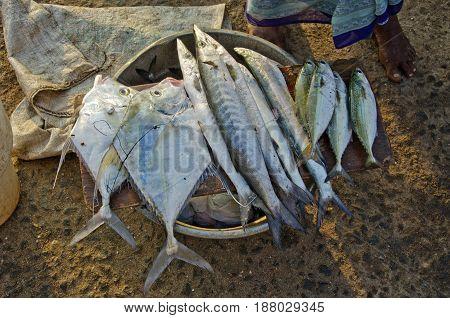 Fresh various fishes in Kanyakumari beach market
