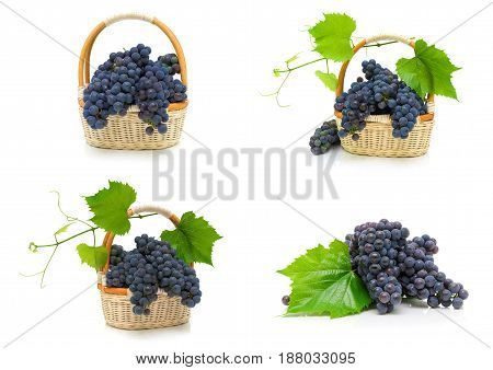 Ripe bunches of dark grapes on a white background. Horizontal photo.