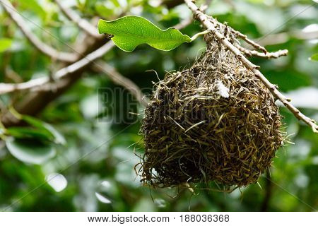 Birds nest hanging in the trees in Addo