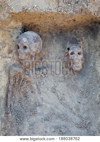 Archaeological excavation with skeletons and skulls still half buried in the ground