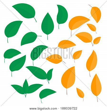 Set of colorful leaves in summer and autumn differently curled isolated on white background