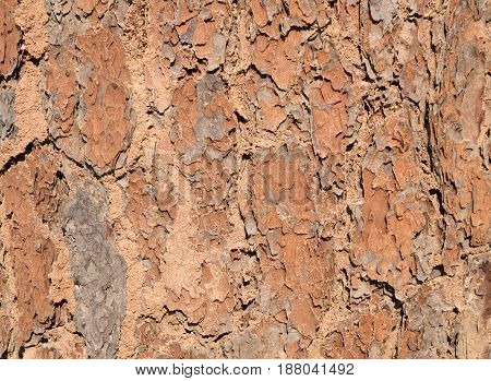Bark Wood Tree Details. Close Up Old Wrinkle Wooden Texture Background.