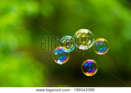 Rainbow soap bubble on green blurred background