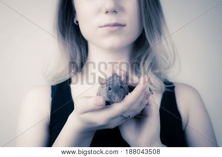 The girl is holding a rat in her hands. The rat looks at the camera.