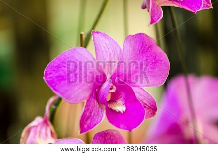 Close-up of yellow-pink orchid flower. Zen in the art of flowers. Macro photography of nature., Sensitive Focus.