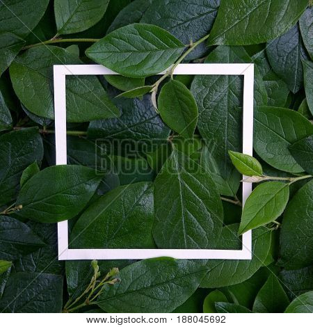 Creative layout made leaves with white paper frame. Flat lay. Top view