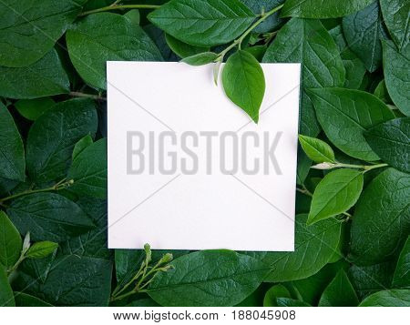 Creative layout made of leaves with paper card note. Flat lay. Top view
