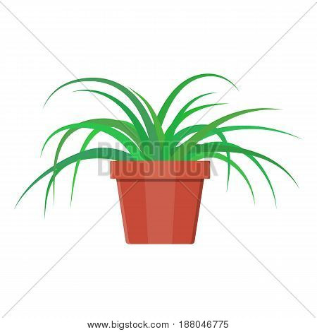 Grass plant in flower pot. Decoration home plant. Vector illustration in flat style