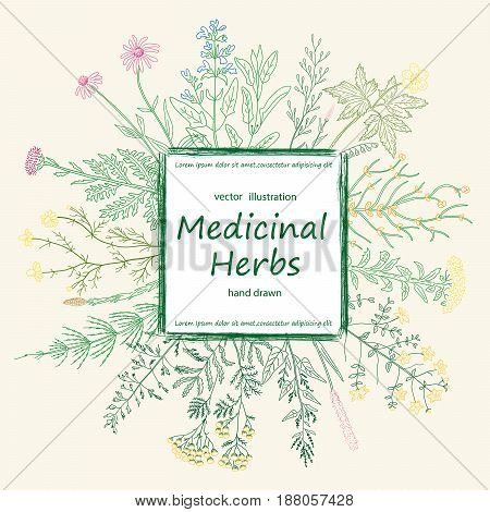 Color card of a medicinal herbs and flowers. Vector sketch hand drawn illustration. Vintage botanical medicinal and cosmetic plants.