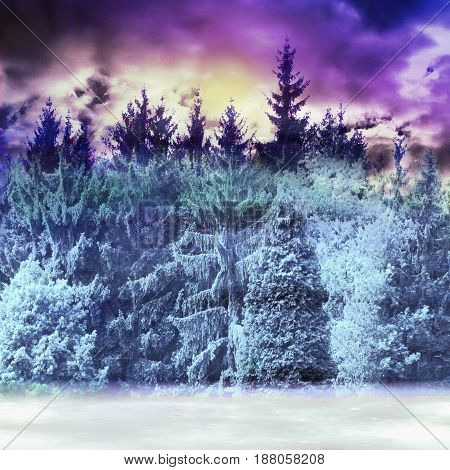 Winter snowy panoramic forest landscape with frozen conifers and dramatic sky. Blue, white, purple and black wild landscape with clouds and sunset
