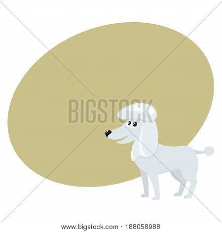 Cute, well groomed, purebred white poodle dog character, cartoon vector illustration with space for text. Lovely white poodle dog character, mouth open, colorful cartoon illustration