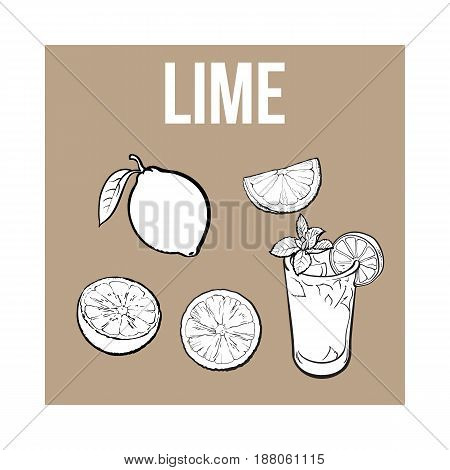 Set of whole, half, quarter lime and glass of lemonade with ice, sketch style vector illustration on brown background. Hand drawn whole and cut lime and glass of lemonade with ice