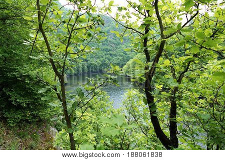 Green Tree Branches With Leaves