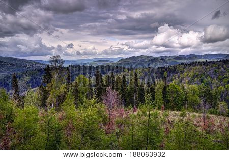 Tatra National Park forest in Slovakia. Cloudy midday
