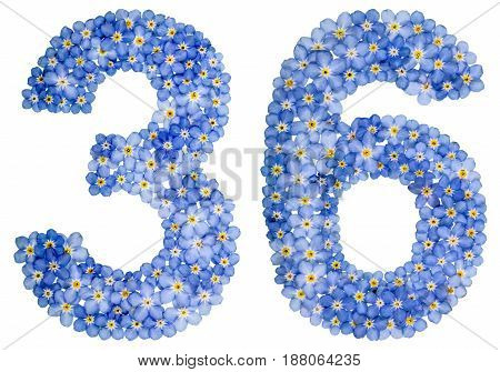 Arabic Numeral 36, Thirty Six, From Blue Forget-me-not Flowers