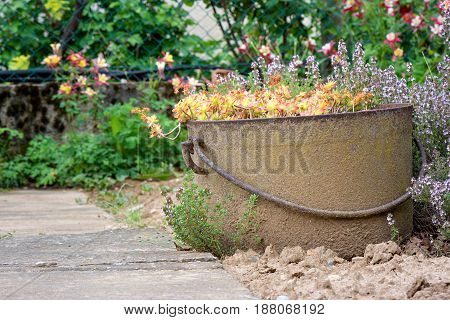 Gardening. An old and rusted flowerpot in the garden with flowers.