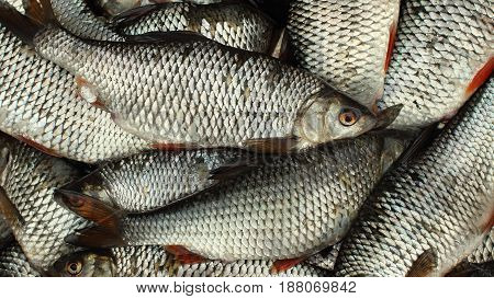 Live fish successful fishing full basket overhead view