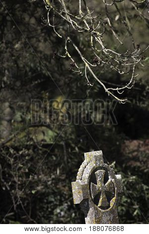 Life and death. A budding tree above an ancient moss covered grave headstone. Symbolic of the circle of life.