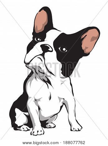 Bulldog illustration in EPS format. The background's vector is 100% editable.