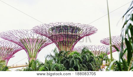 15 January 2016, Singapore - The Supertree At Gardens By The Bay