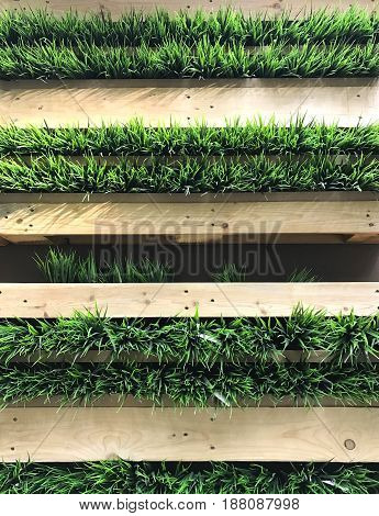 Green grass in wooden wooden box on the wall