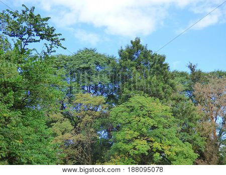 Treetops. Sky and trees. Beautiful nature. Forest. Generic vegetation